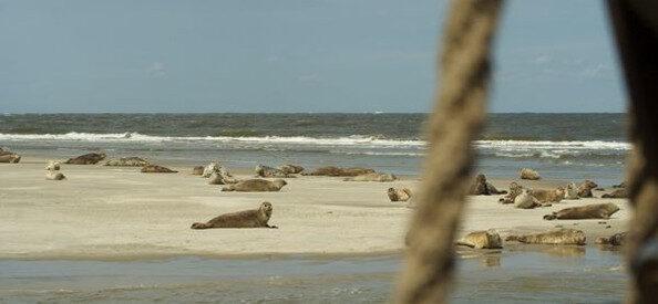 zeehondjes@goudenvloot zeilreizen